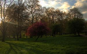 The Green Park, London